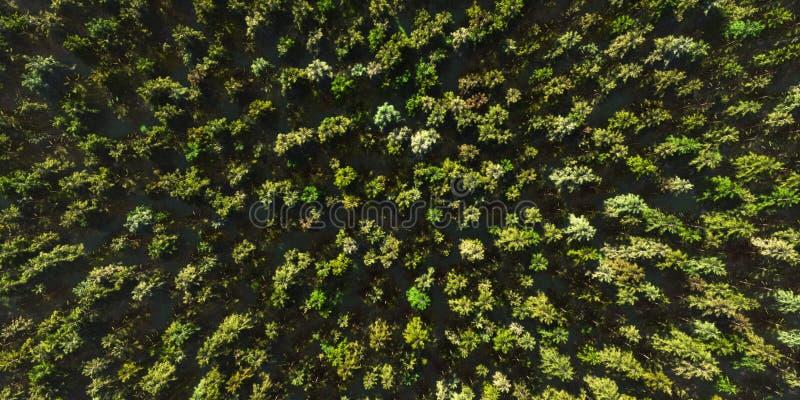 La caméra colorée de vue aérienne se déplace de la forêt verte d'arbre mélangé dense complète, défectuosité à haute résolution de illustration de vecteur