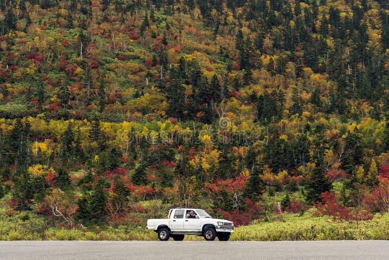 La camioneta pickup y el bosque blancos fotos de archivo