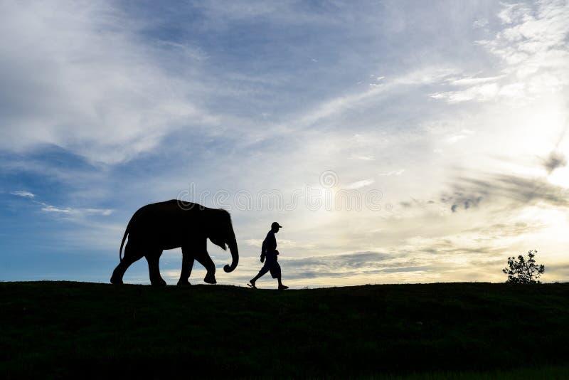 La camminata dell'elefante del bambino della siluetta segue un uomo fotografia stock libera da diritti