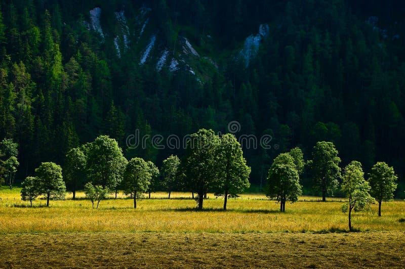 Download La Campagna Intorno Alla Città Di Ramsau Dachstein Fotografia Stock - Immagine di roccia, campo: 56877646