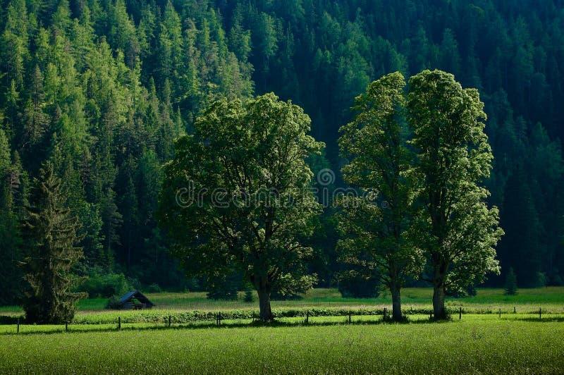 Download La Campagna Intorno Alla Città Di Ramsau Dachstein Fotografia Stock - Immagine di paesaggio, alpi: 56878218