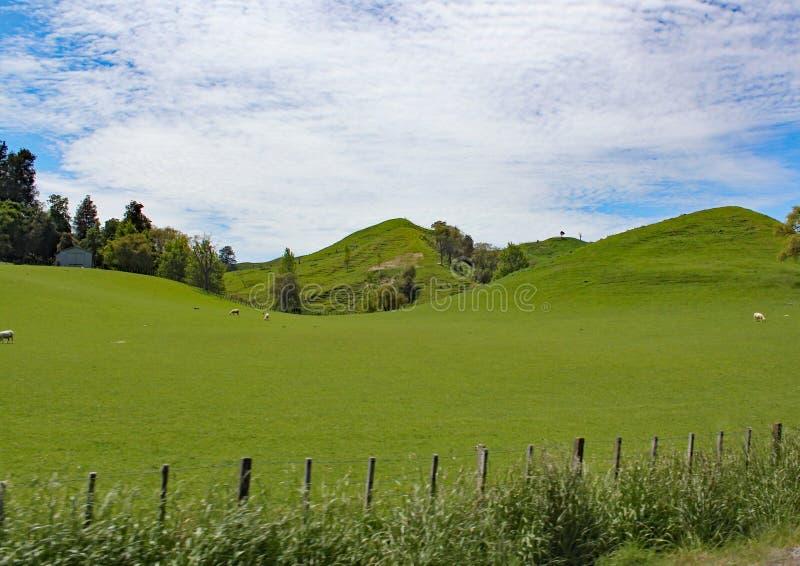 La campagne de roulement de la région de waikato du Nouvelle-Zélande photos libres de droits