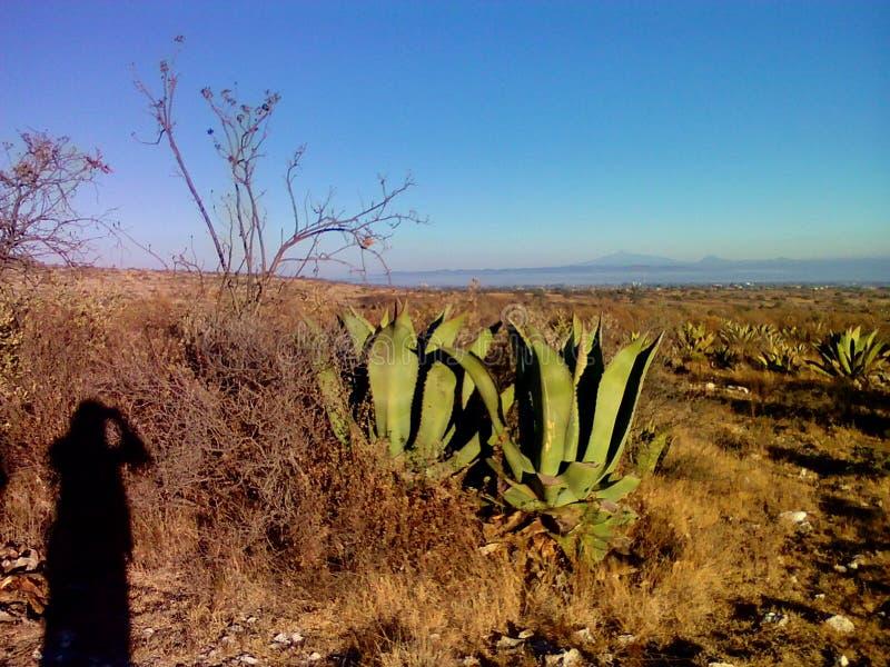 La campagne mexicaine pittoresque image stock