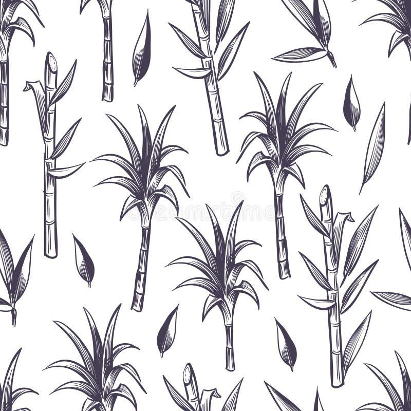 La canne à sucre égrappe avec des feuilles, modèle sans couture de vecteur d'usine de canne à sucre illustration stock