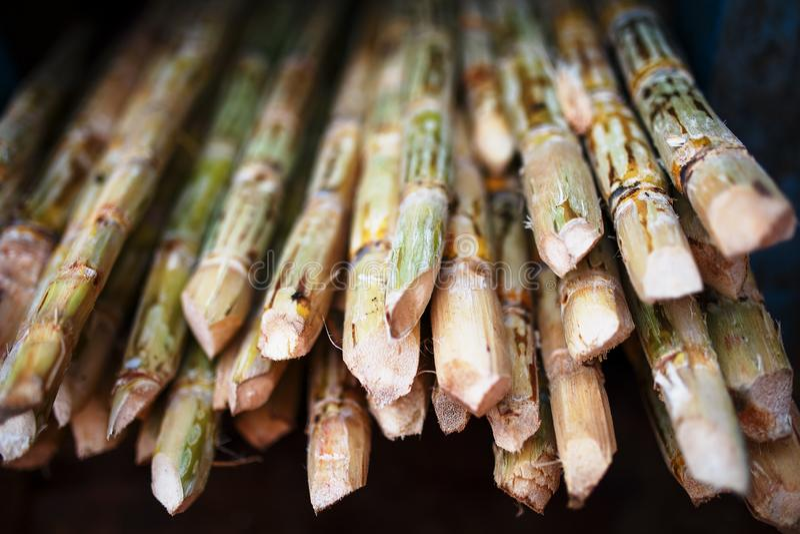 La canne à sucre est une grande pile avant de serrer une boisson de sucre La pile de branches se ferment  photographie stock libre de droits