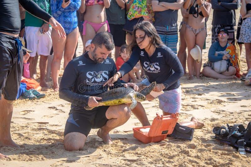 La captura científica de las tortugas de mar de Tamar Project Projeto Tamar en el Praia hace la playa de Boldro - Fernando de Nor imagenes de archivo