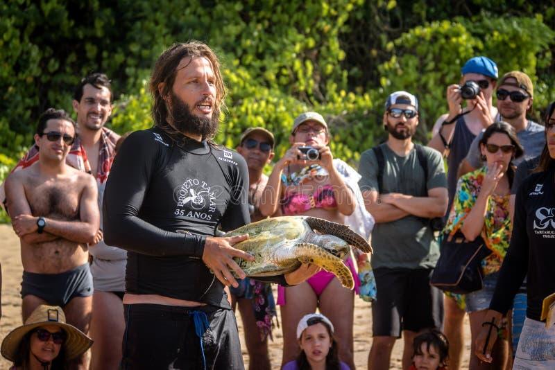 La captura científica de las tortugas de mar de Tamar Project Projeto Tamar en el Praia hace la playa de Boldro - Fernando de Nor fotografía de archivo libre de regalías