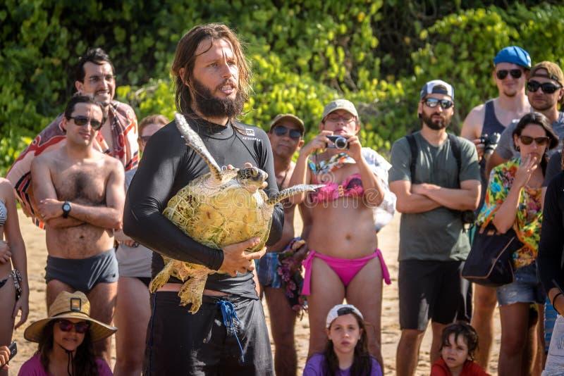 La captura científica de las tortugas de mar de Tamar Project Projeto Tamar en el Praia hace la playa de Boldro - Fernando de Nor foto de archivo