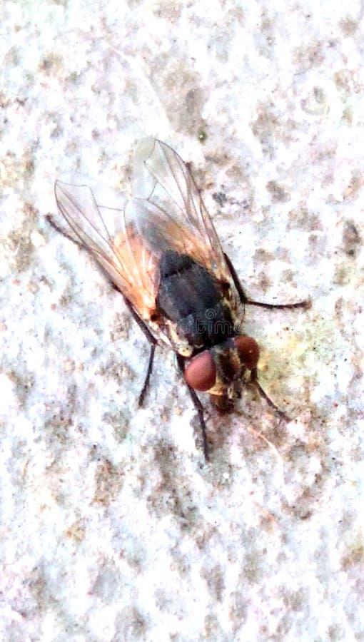 La captura más cercana de la mosca foto de archivo libre de regalías