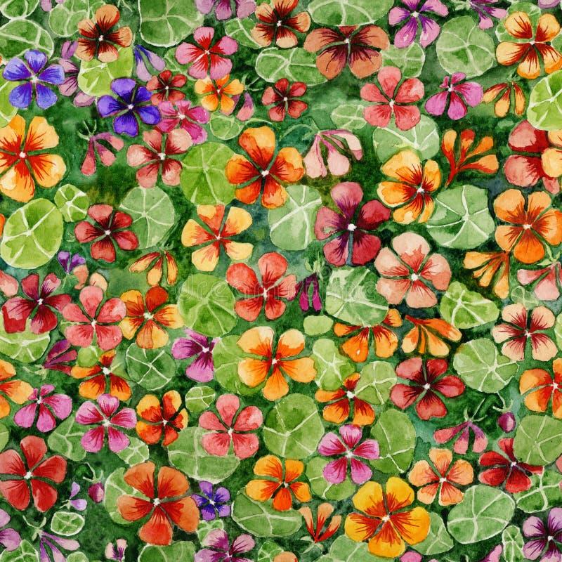 La capuchina colorida florece con las hojas en fondo verde Estampado de flores inconsútil brillante Pintura de la acuarela stock de ilustración