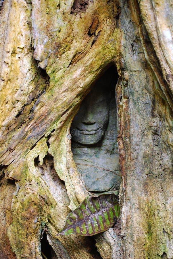 La cara de piedra ocultada, angkor fotografía de archivo libre de regalías