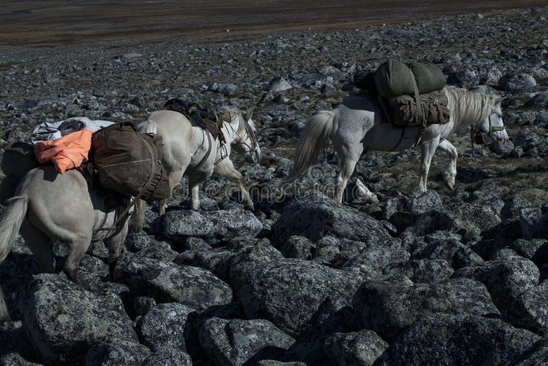 La caravane de cheval a chargé avec la marche sur les roches photographie stock