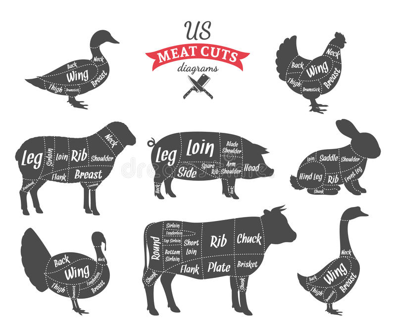 La carne americana (los E.E.U.U.) corta diagramas stock de ilustración