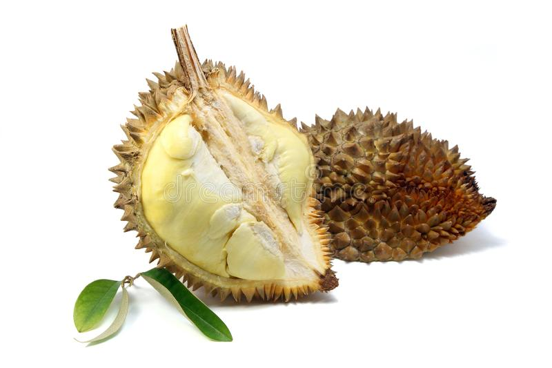 La carne gialla del Durian ed il Durian coprono di foglie su fondo bianco immagini stock