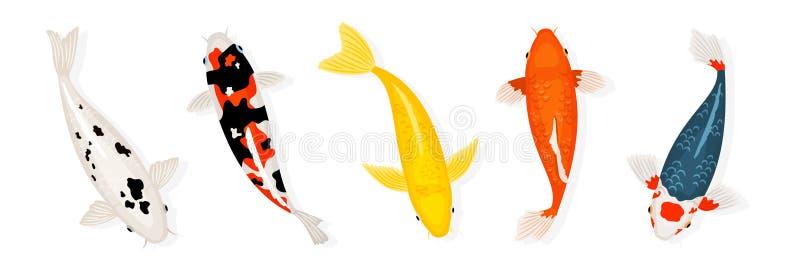 La carpe de Koi pêche l'illustration de vecteur Poissons japonais de koi d'isolement sur le fond blanc illustration libre de droits