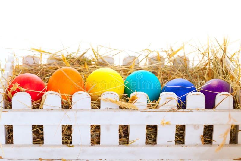 La carta delle uova di Pasqua con la molla fiorisce su fondo bianco fotografie stock libere da diritti