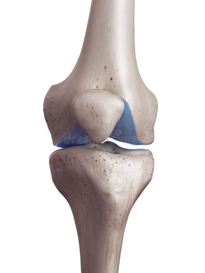 La cartilagine del ginocchio illustrazione di stock