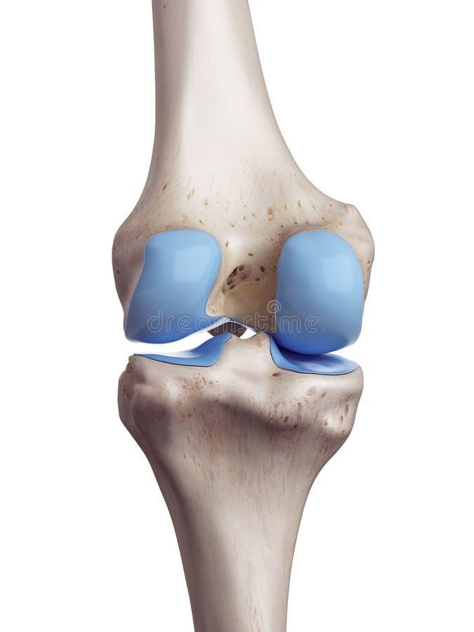 La cartilagine del ginocchio illustrazione vettoriale