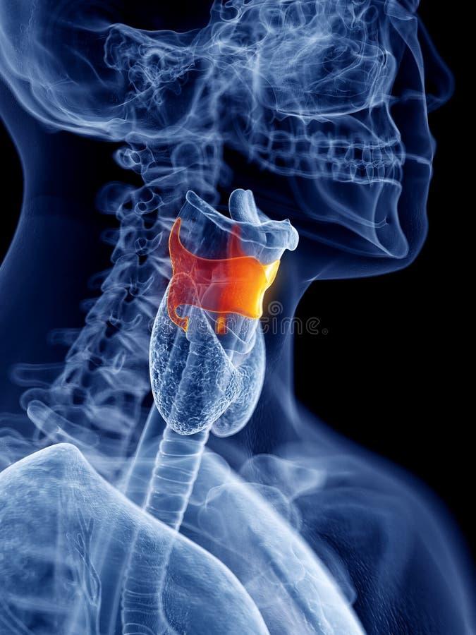 La cartilagine di tiroide illustrazione vettoriale