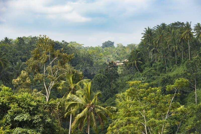 La casa de campo en la selva de Bali con luz del sol de la mañana rompe la niebla del canal imagen de archivo libre de regalías