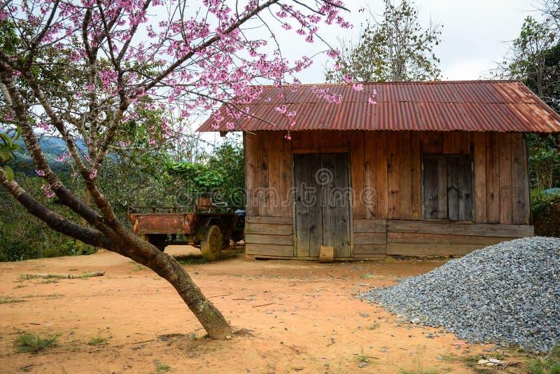 La casa de madera con el árbol de melocotón en Phan sonó, Vietnam fotos de archivo libres de regalías