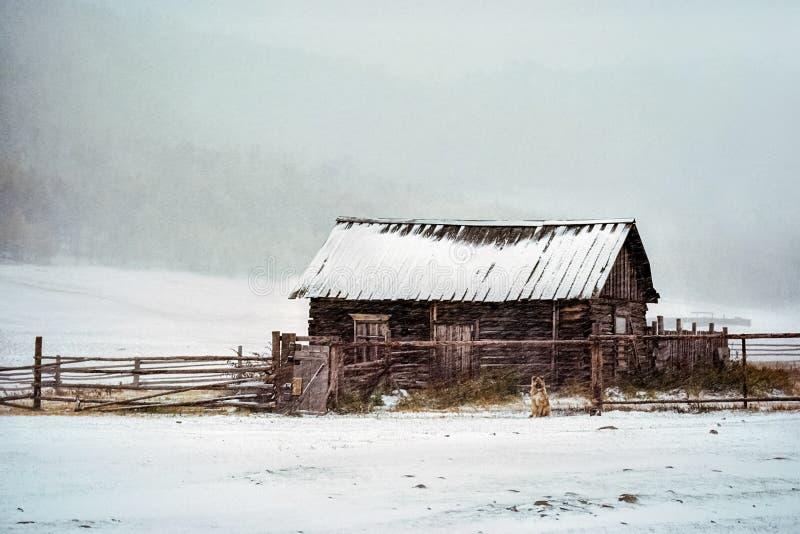 La casa di legno in una bufera di neve, cane sulla via sta aspettando il proprietario immagini stock libere da diritti