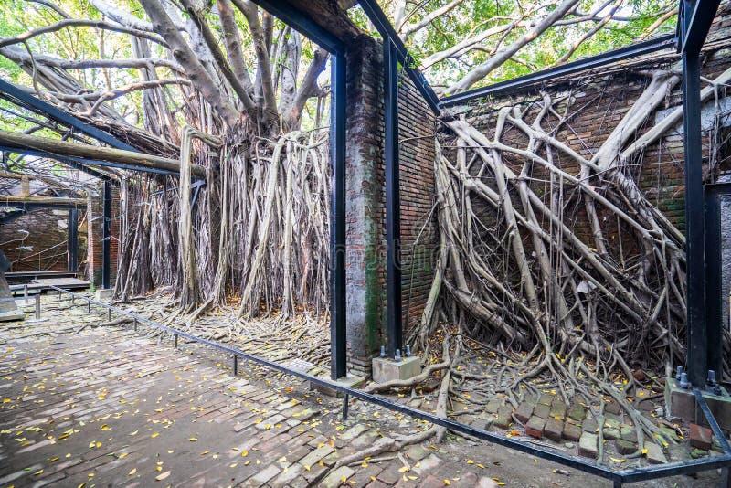 La casa en el árbol de Anping es un almacén anterior en el distrito de Anping, imagen de archivo libre de regalías
