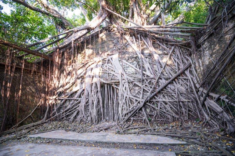 La casa en el árbol de Anping es un almacén anterior en el distrito de Anping, foto de archivo