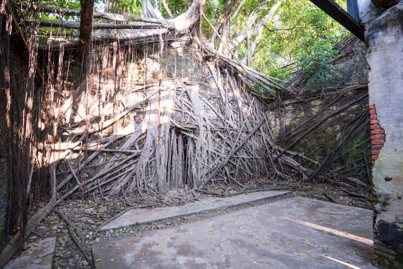 La casa en el árbol de Anping es un almacén anterior en el distrito de Anping, fotografía de archivo libre de regalías