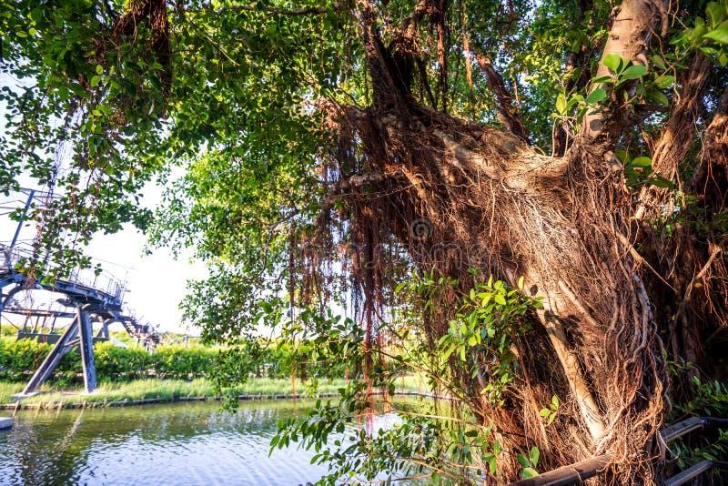 La casa en el árbol de Anping es un almacén anterior en el distrito de Anping, imagen de archivo