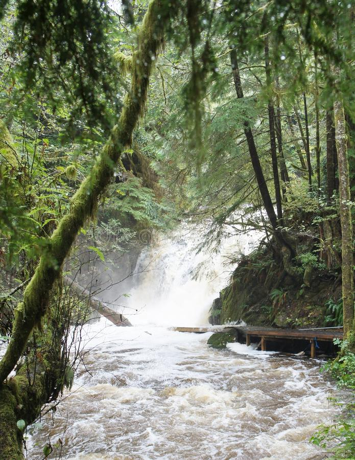 La cascada en la selva tropical de Ucluelet conecta en cascada en un río que rabia fotografía de archivo libre de regalías