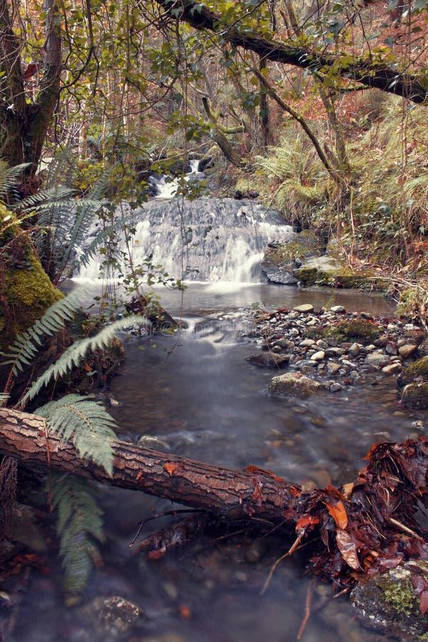 La cascada hermosa en el otoño del bosque ha venido imagen de archivo