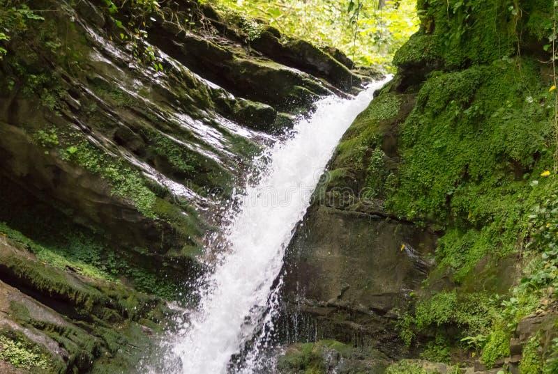La cascade avec une rivière turbulente de montagne de l'eau entre au-dessus de la pente douce couverte de la mousse dans une rése photos stock
