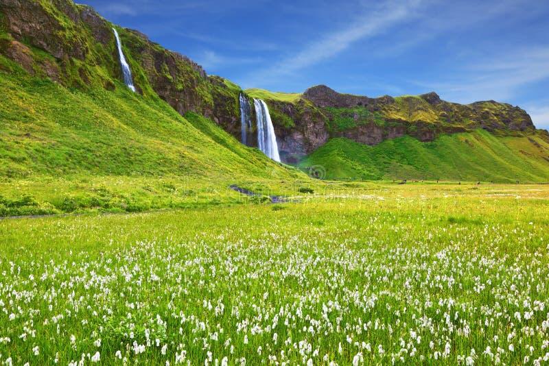 La cascade et les champs fleurissants images libres de droits