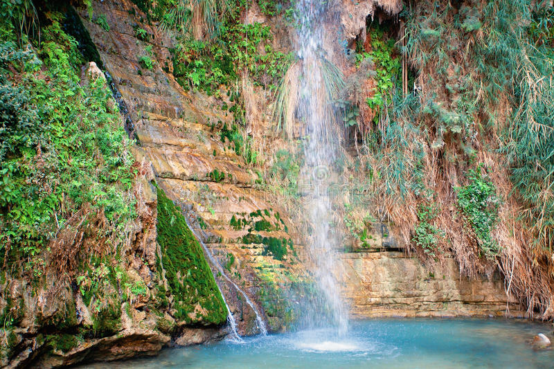La cascata di David alla riserva naturale di Ein Gedi immagini stock libere da diritti