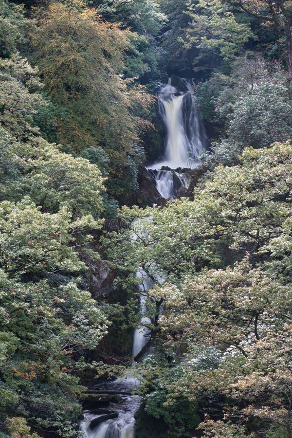 La cascata, Mynach cade, precipita a cascata, alberi in autunno o in caduta immagine stock libera da diritti