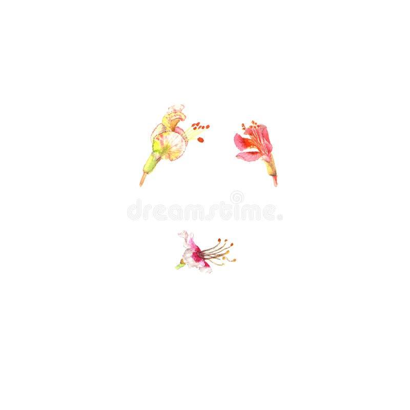 La castagna fiorisce, stile dell'acquerello isolata su bianco Pianta di tempo di primavera Symboll della molla royalty illustrazione gratis