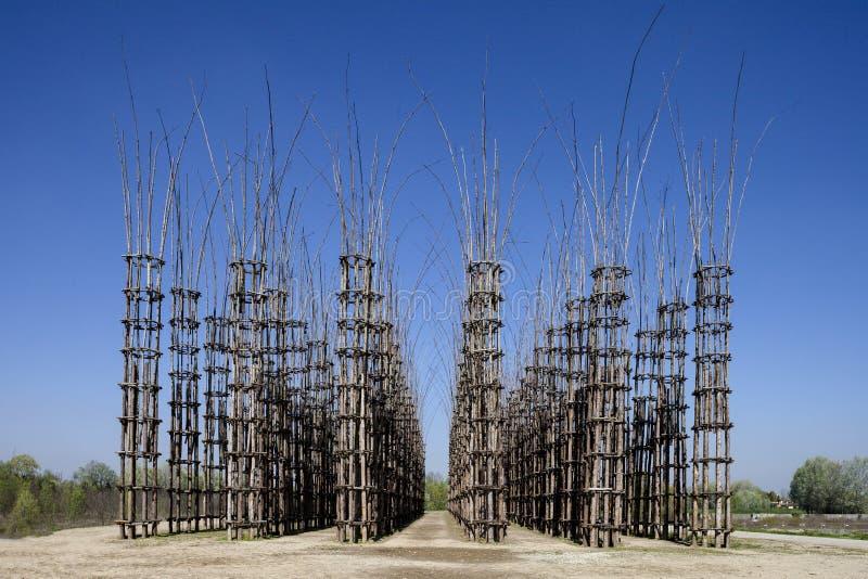 La catedral vegetal en Lodi, Italia, compuesta 108 columnas de madera entre las cuales se ha plantado un roble fotografía de archivo
