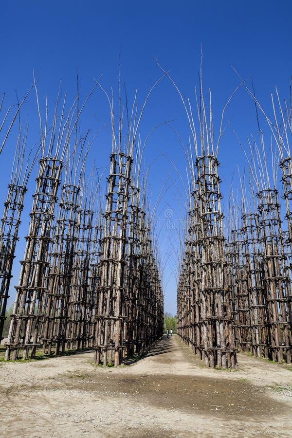 La cattedrale di verdure in Lodi, Italia, composta 108 colonne di legno fra cui una quercia è stata piantata fotografie stock