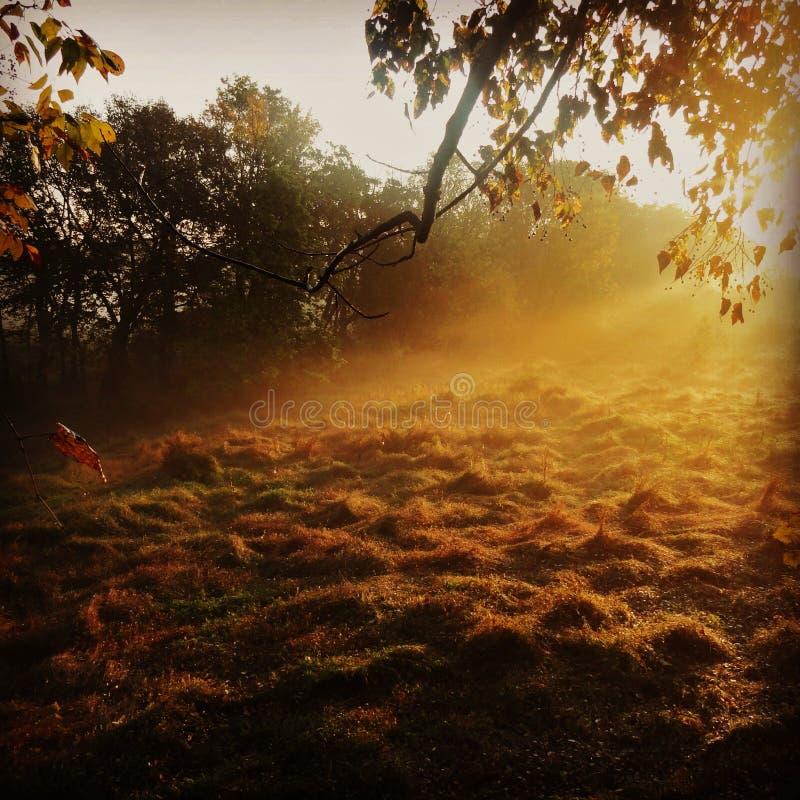 La caza de la mañana imagen de archivo libre de regalías