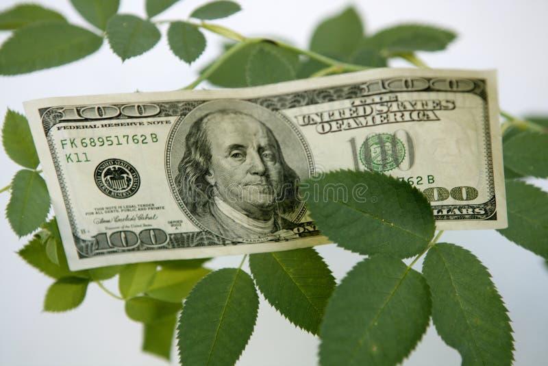 la centrale croissante de notes du dollar s'est levée image stock