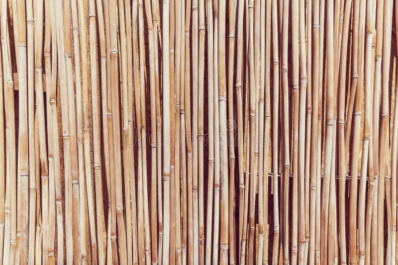 La cerca de los tallos del bastón foto de archivo libre de regalías