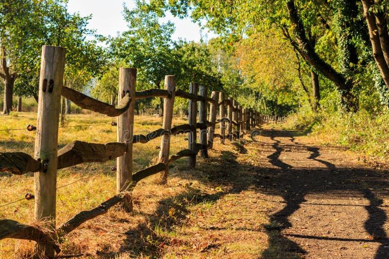 La cerca de madera vierte la sombra Het Vinne, Zoutleeuw, Flandes, Belgi fotos de archivo