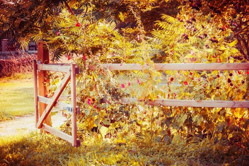 La cerca y la puerta en un otoño cultivan un huerto con las flores y el follaje de otoño fotos de archivo