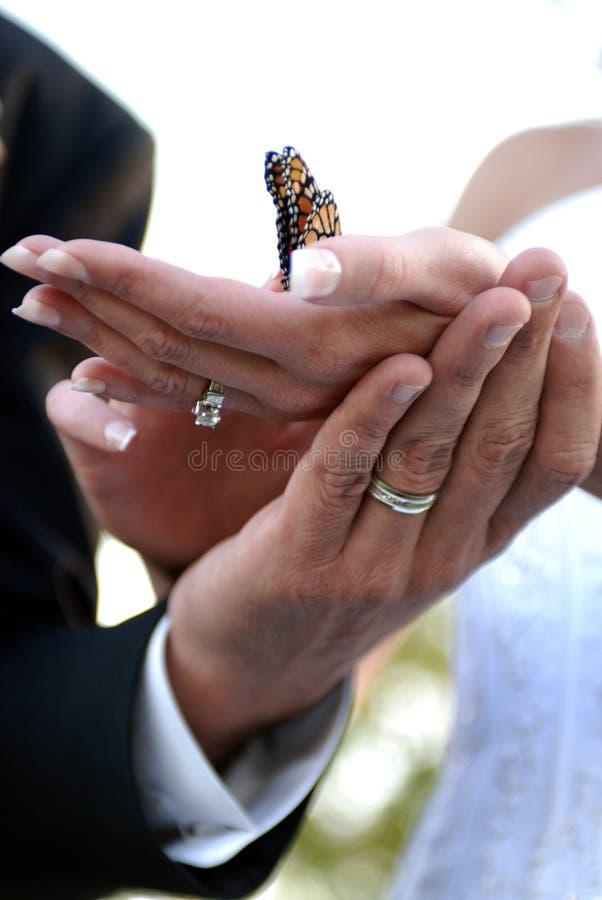 La cerimonia nuziale passa la farfalla della holding immagini stock