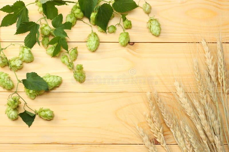La cerveza que elabora los ingredientes salta y los oídos del trigo en la tabla de madera ligera Concepto de la cervecería de la  fotos de archivo libres de regalías