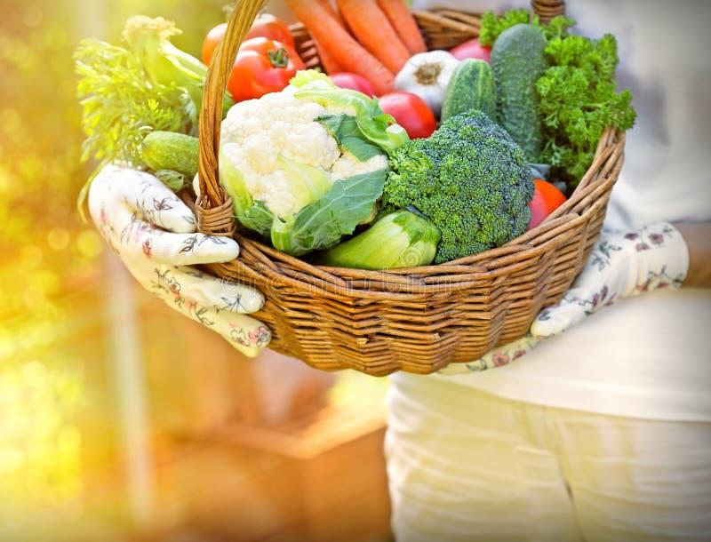 La cesta es llena de verduras orgánicas frescas imagenes de archivo