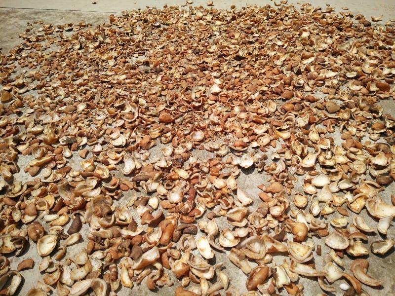 La chair de noix de coco a rendu sec sous la chaleur du soleil photos stock