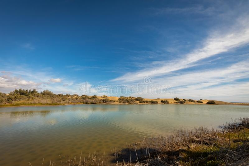 La Charca, bird observation place and nature reserve in Maspalomas in Gran Canaria, Spain. La Charca, bird observation place in Maspalomas Dunes Nature Reserve stock photo