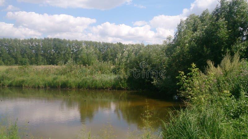 La charca del verano en Tambov imagen de archivo libre de regalías